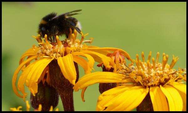 Keep buzzin keep buzzin by claraclank