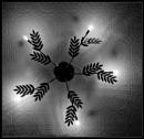 Light re-leaf by rambler