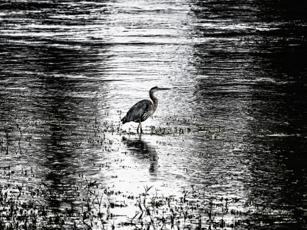 Morning hunt by mlseawell