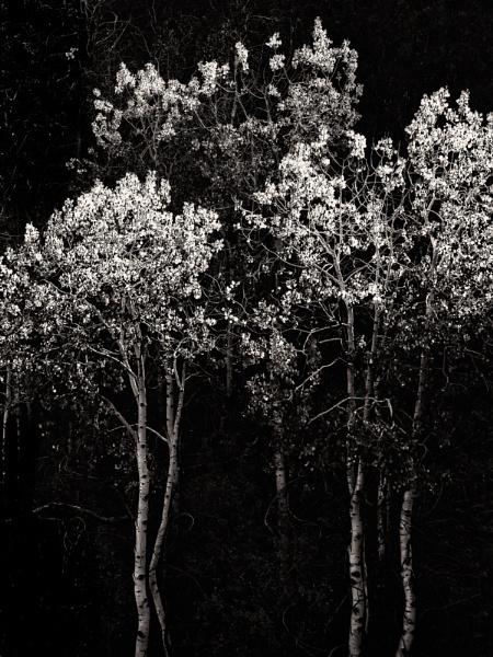 Aspen Mono by mlseawell