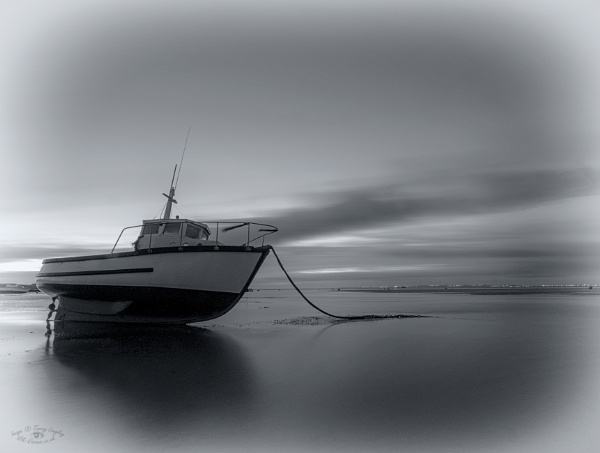 Black n White Dawn by Terry L