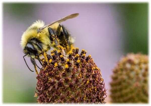 Bee still by EHDesigns