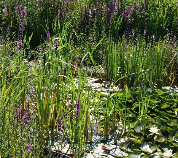 Hidden ponds by ddolfelin