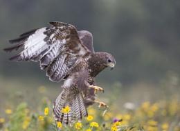 The Talon-ted Leighton Buzzard
