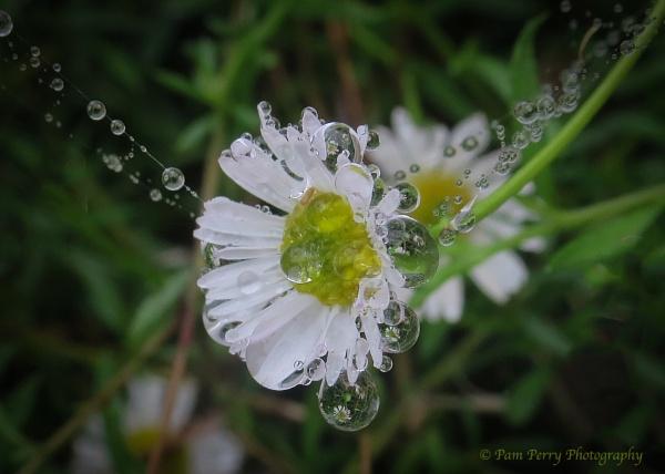 Daisy Pendant. by mashwood10