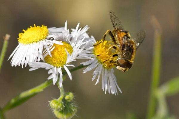 Bee by Diyena