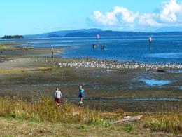 Snappin' Comox Bay