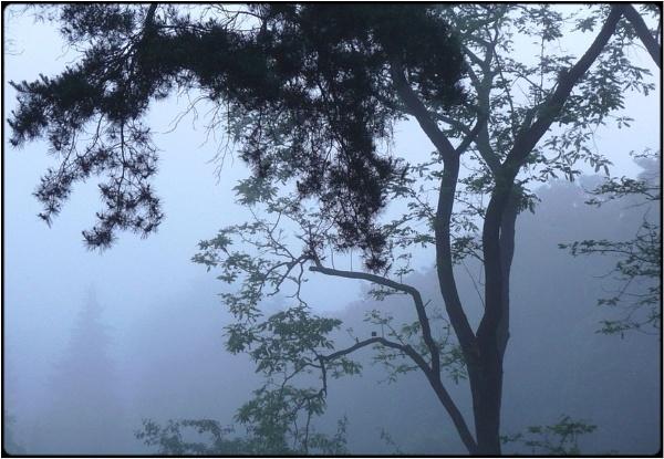 morning tree by FabioKeiner