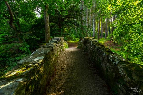 Fancy a walk? by PMWilliams
