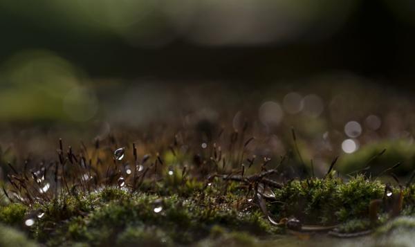 Moss by feen96