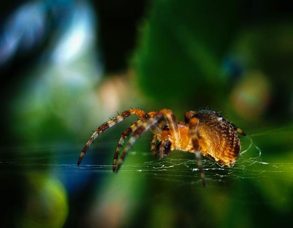 Spider v.2 by DaveRyder
