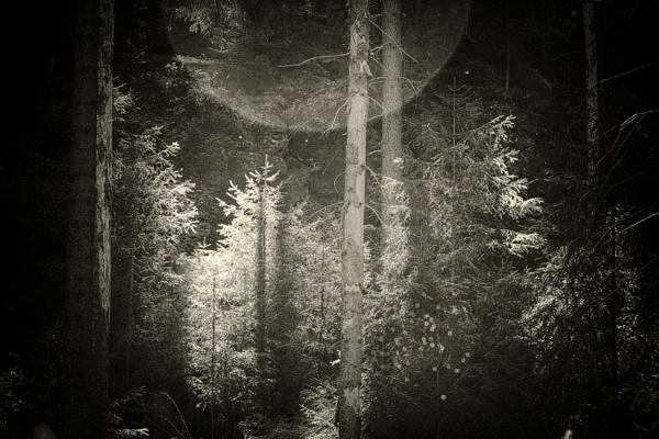 Dark Forest and Sun by gerainte1
