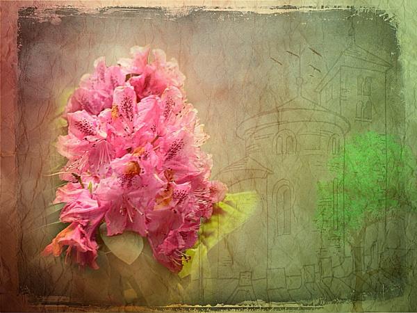 One red flower by fellingmal