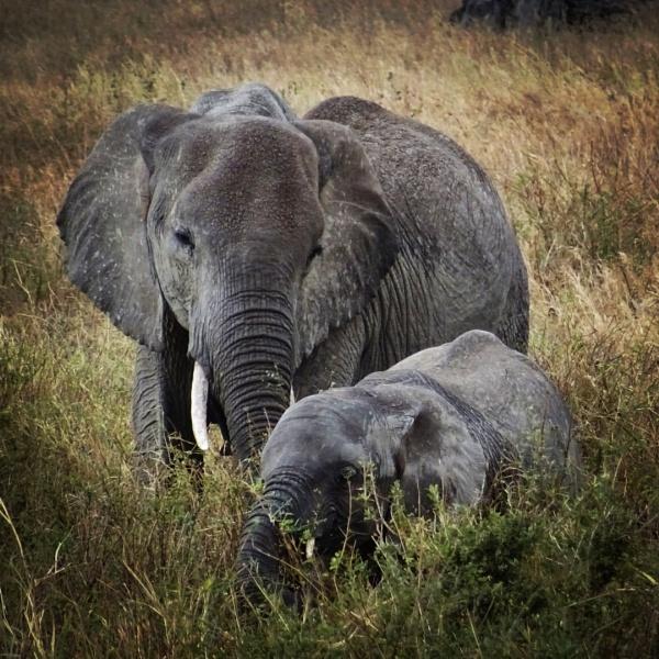 Gentle giants by sheenakblackmore