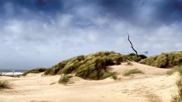 Windswept by msa01uk