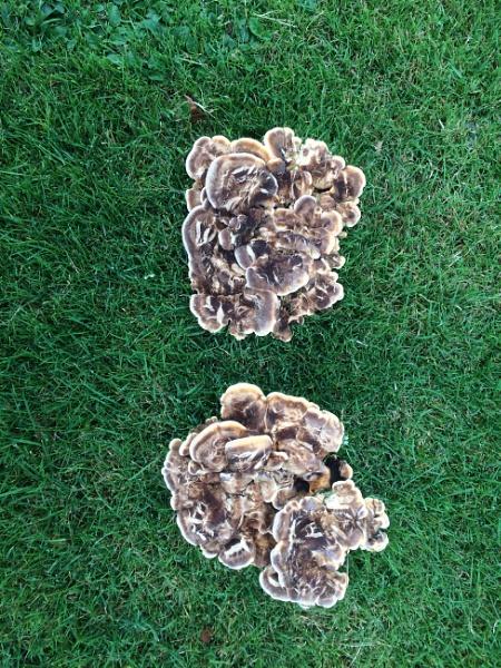 Fungus by happysnapperman