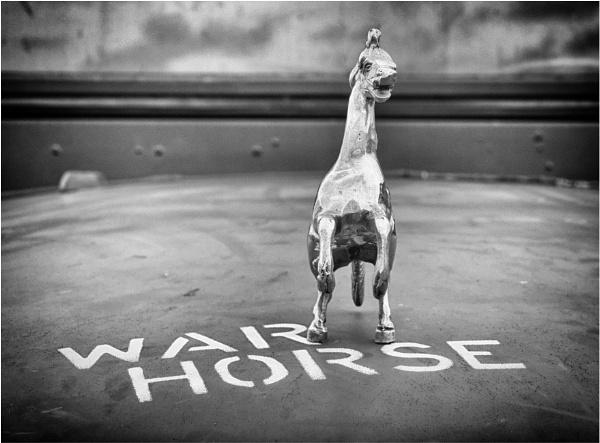 War horse. by franken