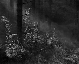 Light on the Ferns