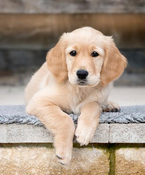 Puppy by DannoM
