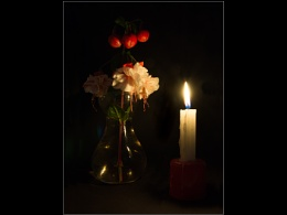 Fuschias by Candlelight