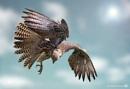 Twisting Gyr x Saker Falcon by lesarnott