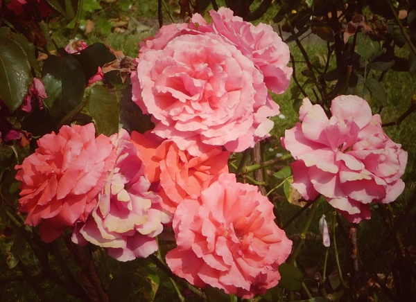 The best of times is now.  What\'s left of Summer  But a faded rose? by StevenBest