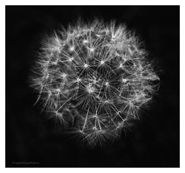 Untitled by bigwheels