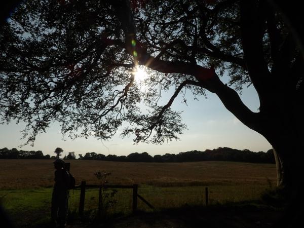September Sun by barn yard