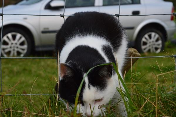 Silly Cat by netta1234