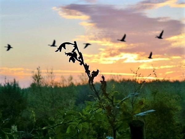 Evening flight by Gary66