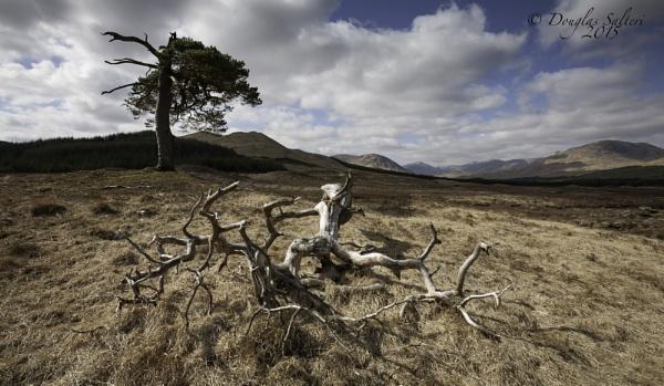 Lightning Struck... by Scottishlandscapes