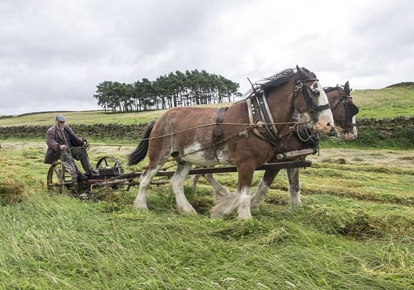 Hay time by danbrann