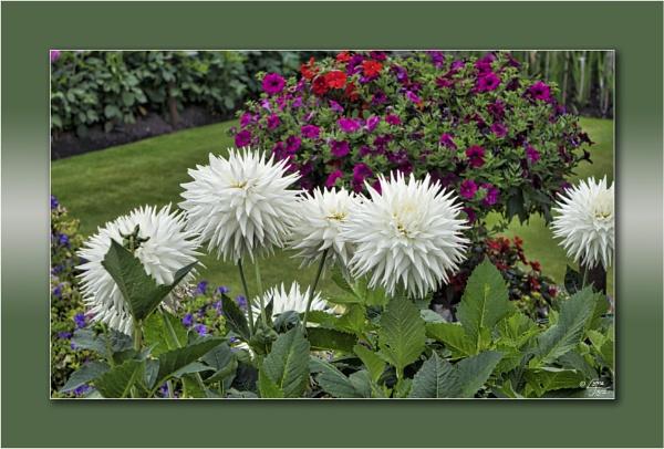 Florabundance by LynneJoyce