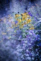 Wisley flower show