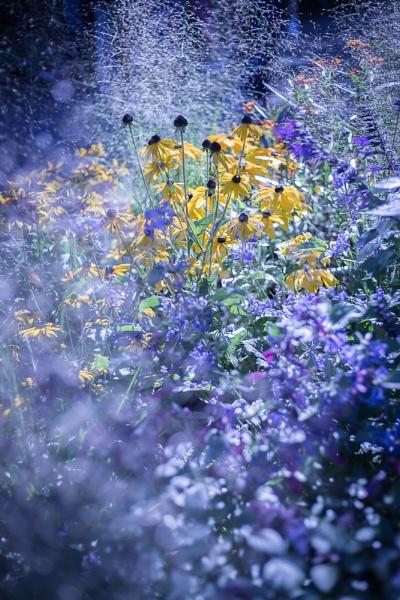 Wisley flower show by JackAllTog