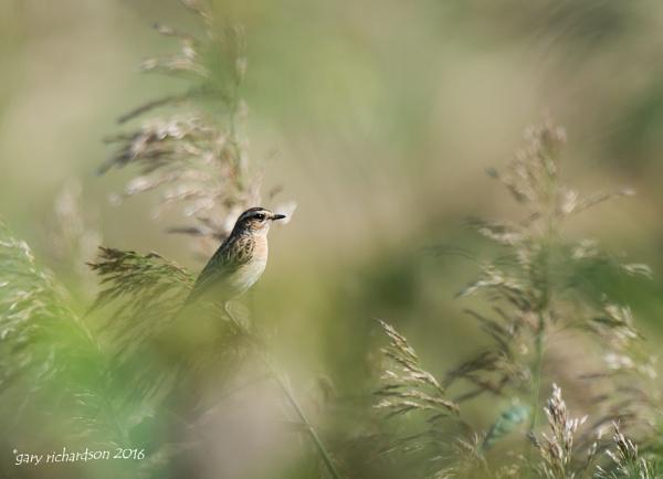 through the reeds by djgaryrichardson