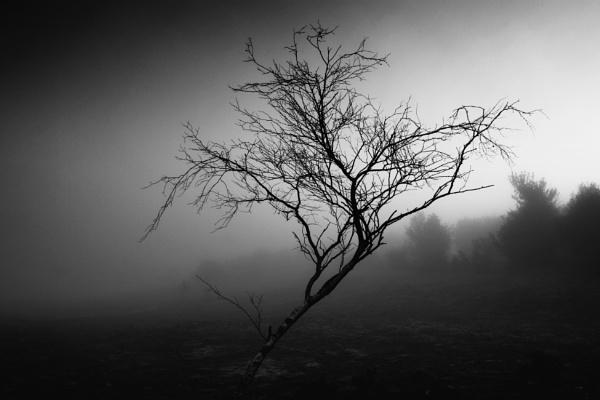 Mist Wraith by marktc