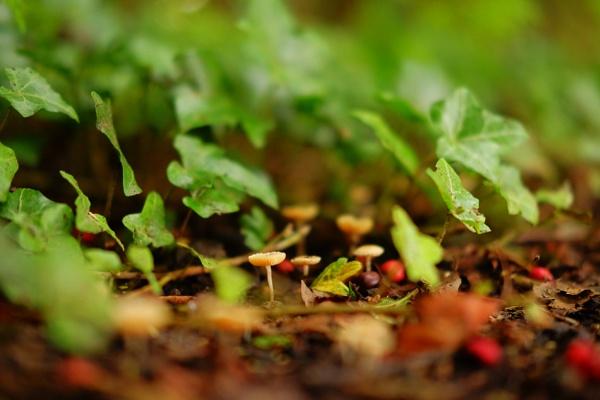 3 little mushrooms by AlexandraSD