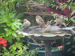 Sparrowdise !