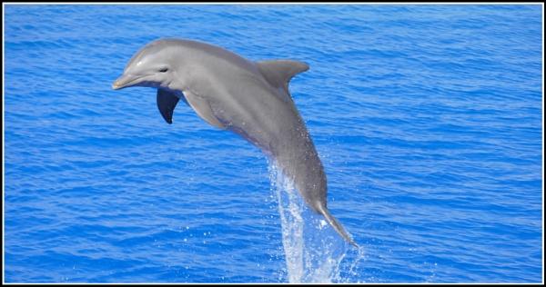 Dolphin by John56