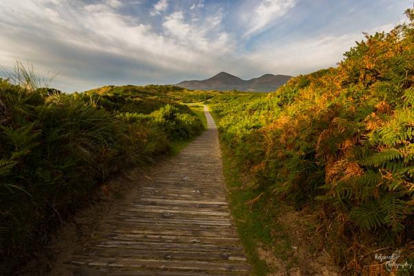 Murlough Nature Reserve by PMWilliams