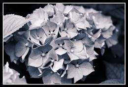 Black&White DXO toning.