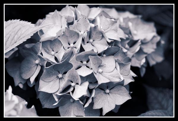 Black&White DXO toning. by retroman