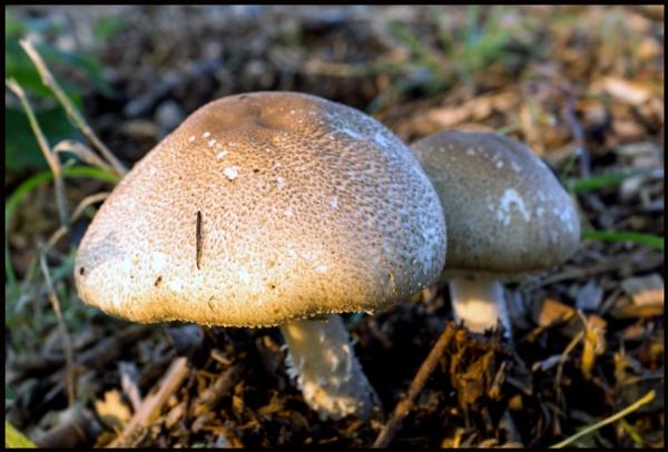 Fungi by BillRookery