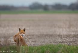 Fantastic Mr Fox!