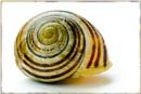 A snail's security by EddieAC