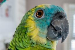Polly  Posing