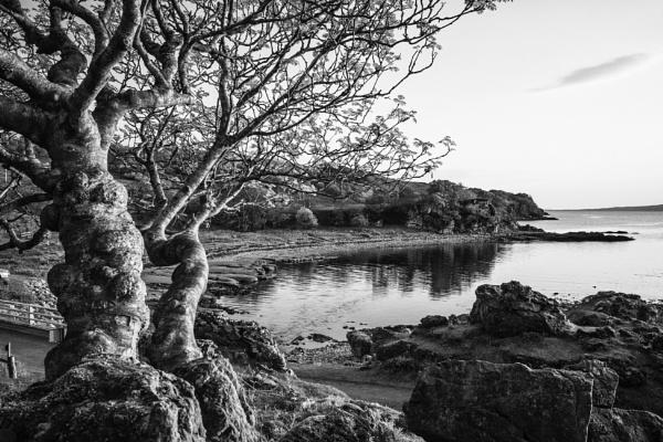 Sleat trees by dawnstorr