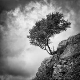 Assynt Tree
