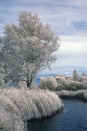 Martham Fishing Lakes - Infrared